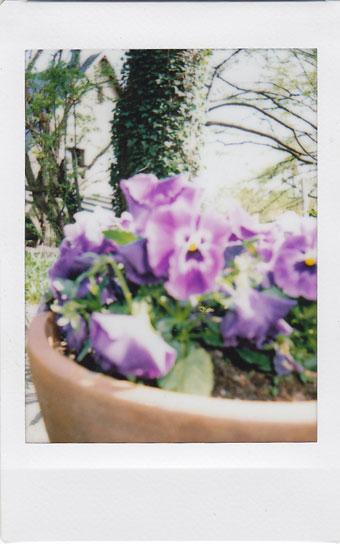flower1