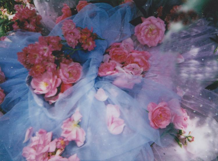 rose-details-n1