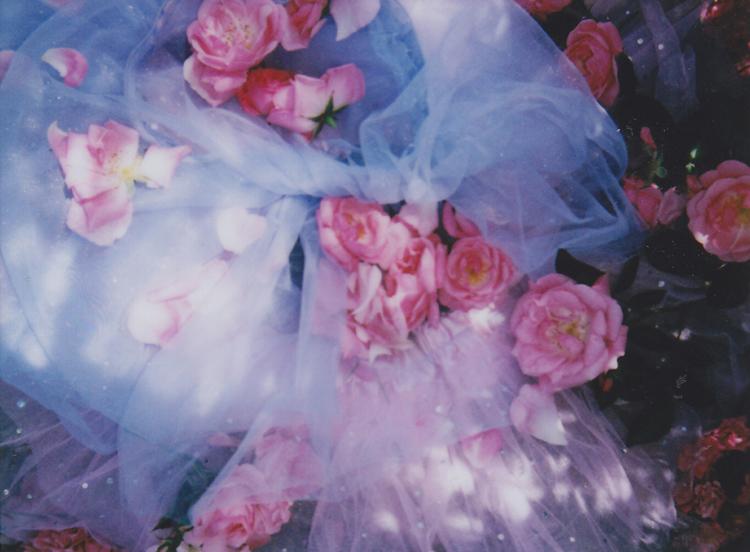 rose-details-n2