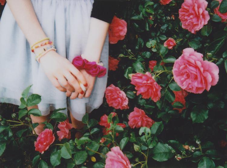 roses2-kopie